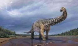 BingMag.com A new species discovered in Australia could be the largest dinosaur on Earth