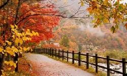 BingMag.com 12 tips for taking more beautiful photos in the fall
