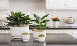 BingMag.com 10 apartment plants that are ideal for storage in the kitchen