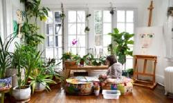 BingMag.com Everything you need to know about houseplants and their care