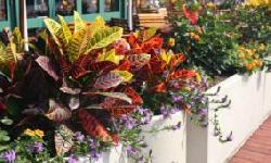 BingMag.com 14 colorful apartment plants that double the charm of the house