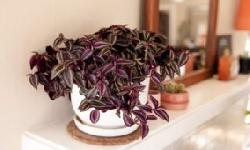 BingMag.com A complete guide to the maintenance, propagation and care of the willow leaf plant